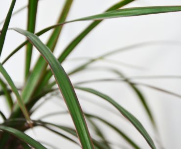 Close up of plant leaves.
